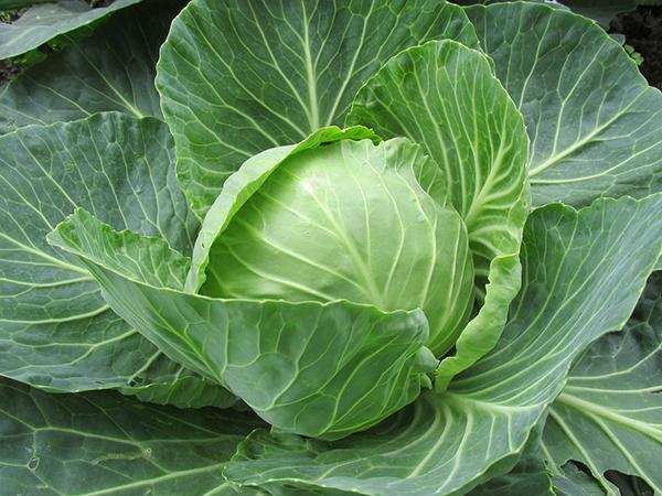 ปลูกผักกินเอง