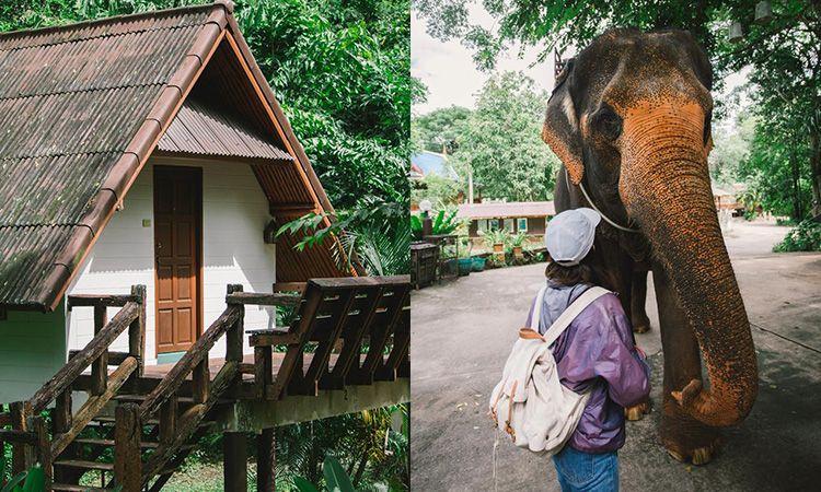 พักเขาใหญ่ นอนใกล้ธรรมชาติ ที่ The Jungle House