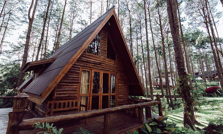 """ที่พัก """"สวนป่าดอยบ่อหลวง"""" บ้านไม้ดีไซน์น่ารัก ท่ามกลางป่าสน"""