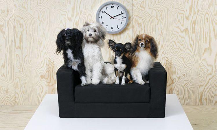 IKEA เปิดตัวคอลเลคชั่นเฟอร์นิเจอร์ เอาใจสัตว์เลี้ยงแสนรัก ประหนึ่งเป็นสมาชิกในครอบครัว