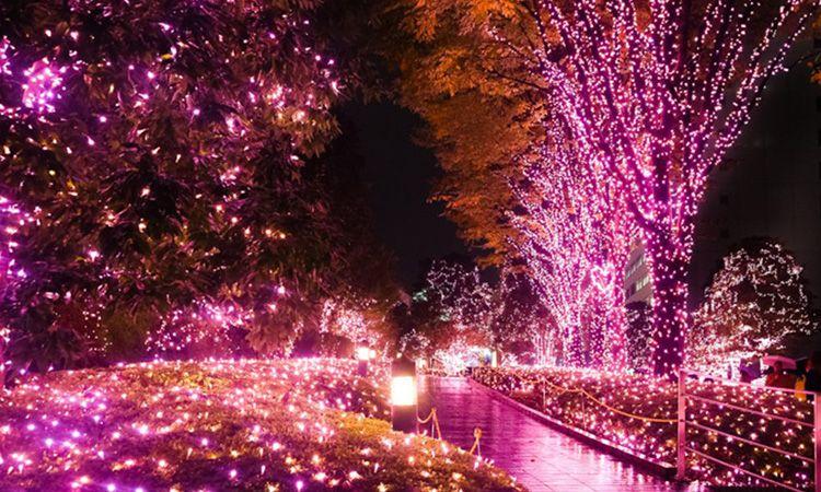 มาแล้ว กำหนดการ Shinjuku Terrace City Illumination '18-'19