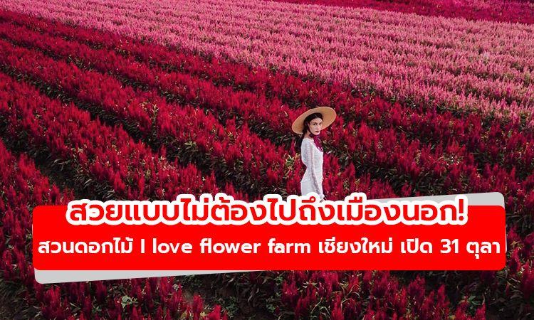 สวยแบบไม่ต้องไปถึงเมืองนอก! สวนดอกไม้ I love flower farm เชียงใหม่ เปิด 31 ตุลานี้
