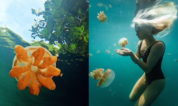 ดำผุดดำว่ายไปพร้อมกับแมงกระพรุนไร้พิษ ที่ Jellyfish Lake ประเทศปาเลา