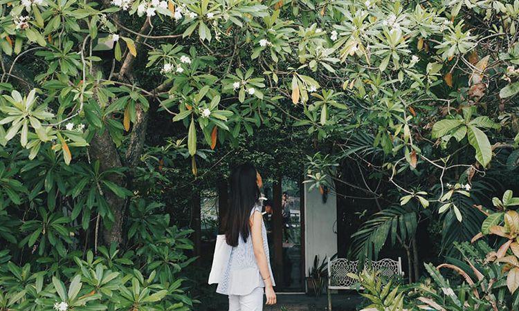 Little Tree Garden คาเฟ่เล็กๆ ในสวนสวยริมแม่น้ำท่าจีน จ.นครปฐม