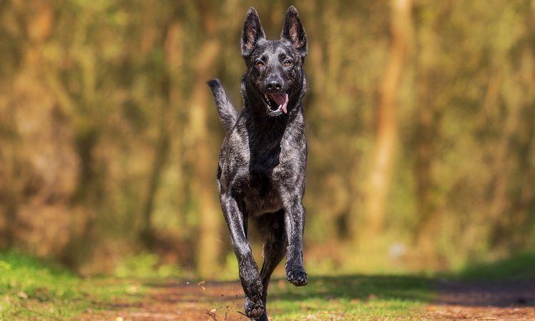 กรมควบคุมโรคแนะ! หยุดความเสี่ยงติดเชื้อพิษสุนัขบ้า ด้วยคาถา 5ย.