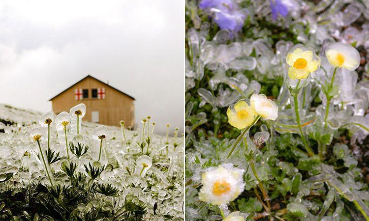 ดอกไม้ใบหญ้าที่ Kazbegi จอร์เจีย มันช่างน่ารักปุ๊กปิ๊ก