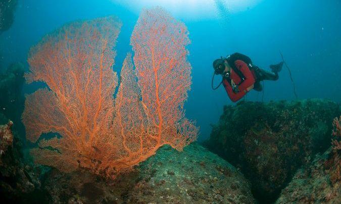 ว้าวมาก! ท่องโลกใต้ทะเลสีคราม เกาะติโอมัน มาเลเซีย